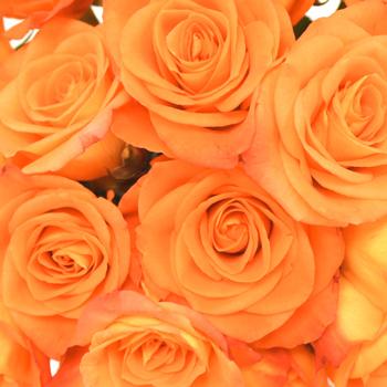 Mandarin Twist Sweetheart Roses
