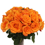 Orange Rose Miracle