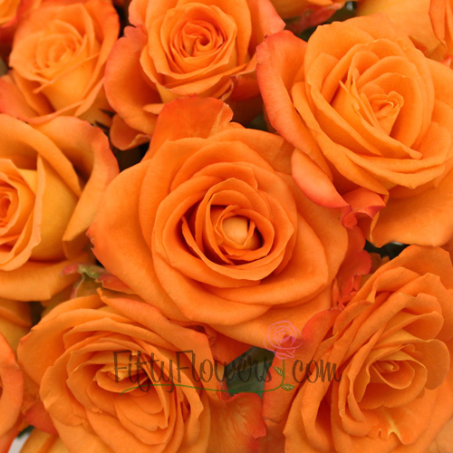 Miracle Tangerine Orange Rose