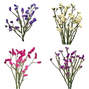 Choose Your Own Statice Flower Pack
