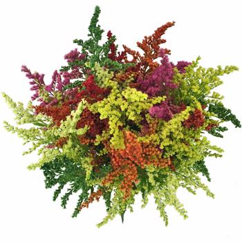 Mix of Enhanced Estelle Filler Flowers