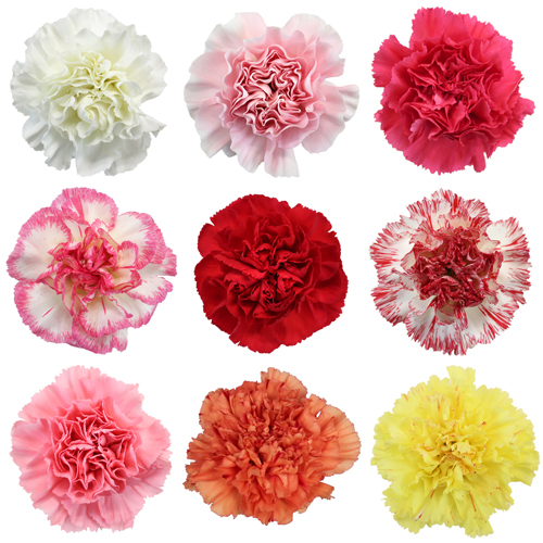 Valentine\\\'s Farm Mix Carnation Special