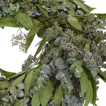 Mixed Eucalyptus And Bay Leaf Wreath Fiftyflowers Com