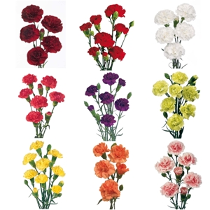 Mixed Solid Colors Mini Carnation Flowers