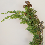 Wedding greenery monterey cypress winter filler flower sold near me