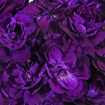 Mauve Bulk Carnation flowers