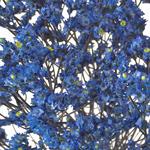 Blue Limonium Flower for Weddings