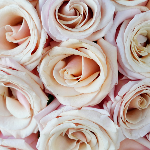 Mother of Pearl Roses
