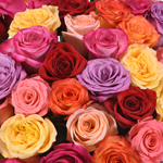 mothers day color rose wholesale flowers