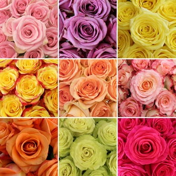 Mother's Day Wholesale Roses