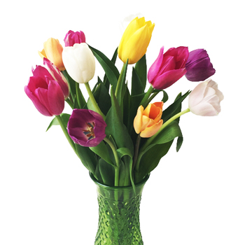 Fresh Cut Tulips for Mother's Day Bulk Choose your Color