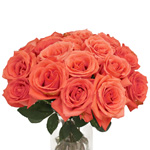 Salmon Pink Rose Movie Star