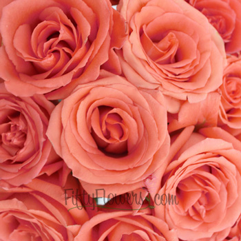 Movie Star Salmon Rose
