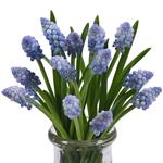 Yellow Bulk Hyacinth Flower