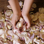 Mauve Dried Rose Petals
