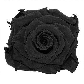 Preserved Night Black Rose