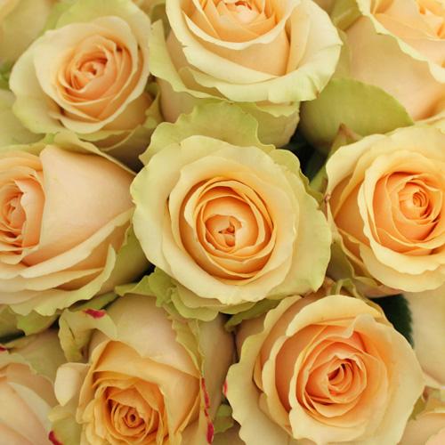 Antique Peach Nectarine Rose