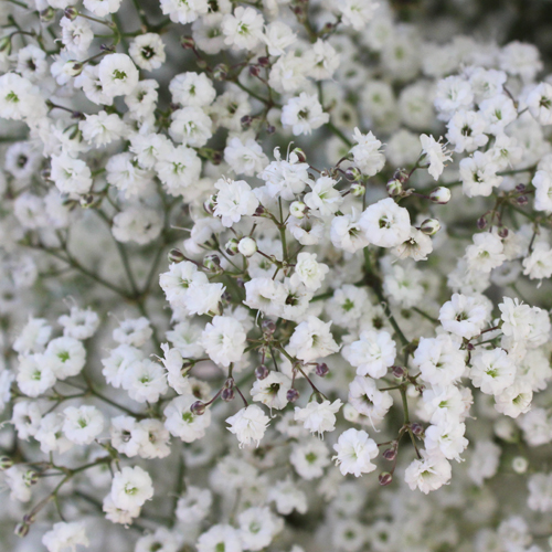 New Love Baby's Breath Flower