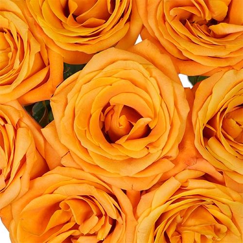 Orange You Confident Rose
