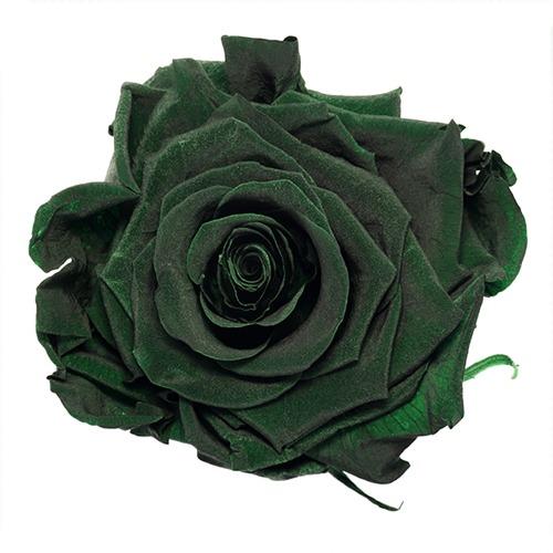 Preserved Olive Green Rose