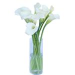 Cream Mini Calla Lilies