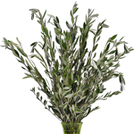 Wholesale greenery fresh cut olive branches sold as bulk