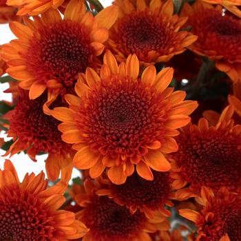 Fall Orange Pom Flower