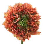 Fresh Ranunculus Farm Mix Flower