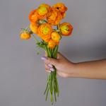Fresh Ranunculus Orange Flower