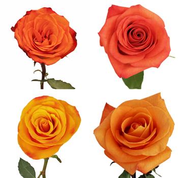 Valentine's Orange Rose Special