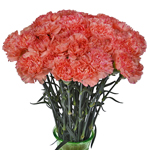 Orange Bulk Carnations flowers
