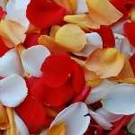 Fall Wedding Fresh Roses Petals