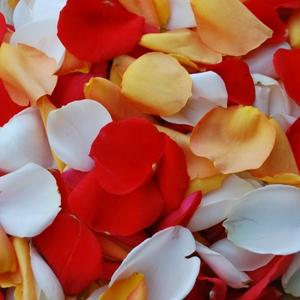 Fall Wedding Fresh Roses Petals