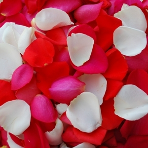 Bright Fresh Rose Petals for a wedding