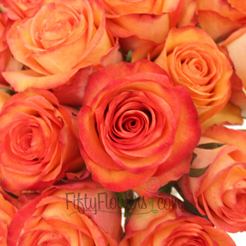 Orange Sunset Fidji Roses up close
