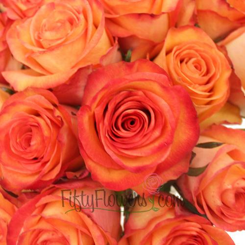 Orange Sunset Fidji Roses up close