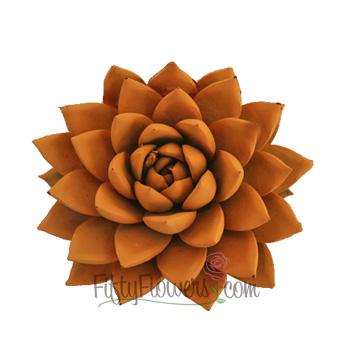 Tangerine Enhanced Succulent Flower