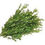 Wedding greenery Oregonia filler flowers sold as bulk