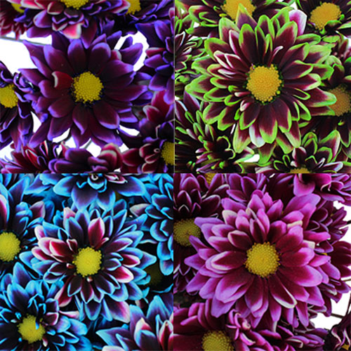 Psychedelic Daisy Flower Mixed