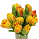 Monarch Parrot Novelty Tulip Flower