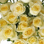 Pale Yellow Wholesale Spray Roses