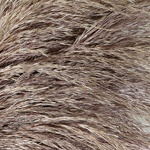 Wholesale greenery bulk pampas grass filler flowers sold near me for delivery