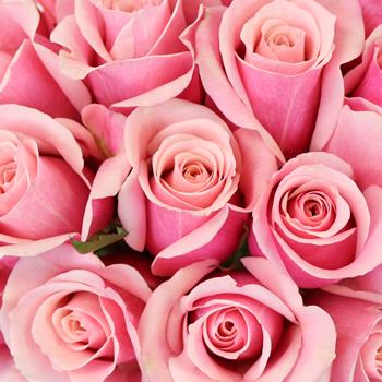Irresistible Pink Sweetheart Roses