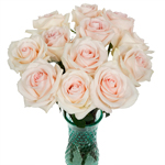 Champagne Rose Message
