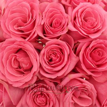 Pavarotti Medium Pink Rose