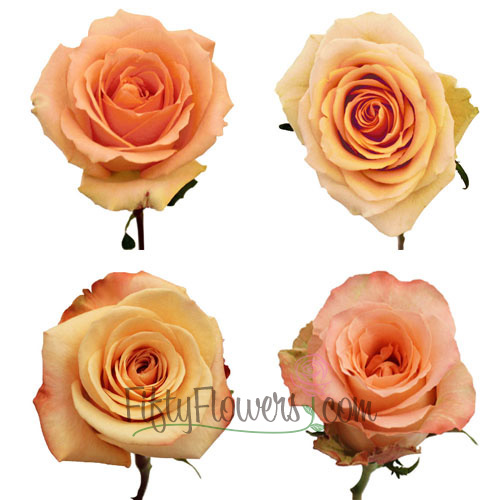 Peach Fresh Cut Roses Express Delivery