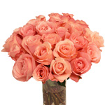 Salmon Pink Rose Peckoubo