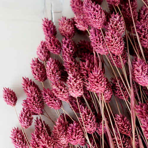Dried Antique Raspberry Canary Grass