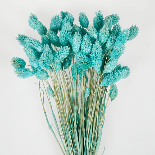 Light Blue Dried Canary Grass
