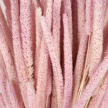 Blush Dried Timothy Grass